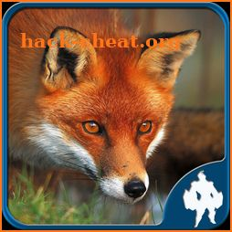 Fox Jigsaw Puzzles icon