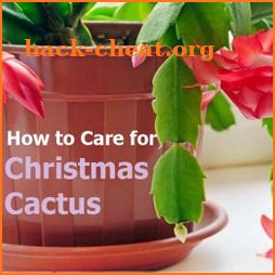 How to Care for a Christmas Cactus icon