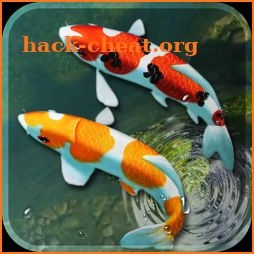 Koi Fish Live Wallpaper 3d Aquarium Background Hd Hack
