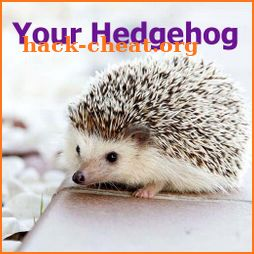 Your Hedgehog icon