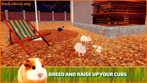 Cute Guinea Pig Home Adventure Simulator 3D Hack Cheats and Tips  hack-cheat.org